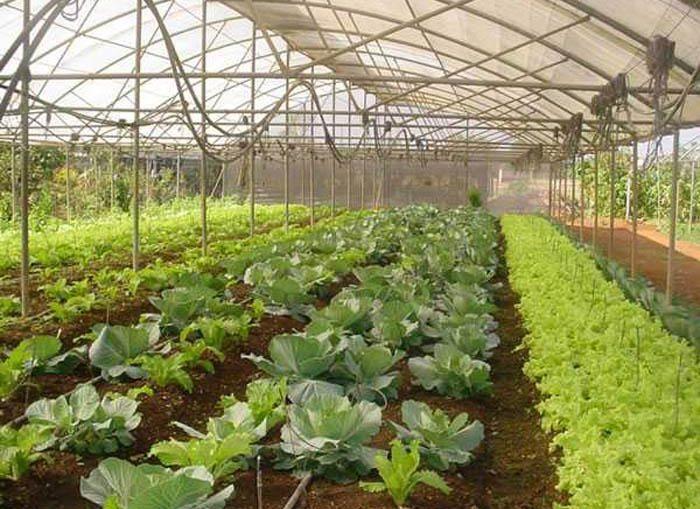 En una primera etapa se producirá los bioproductos Azospirillum, inoculante bacteriano fijador de nitrógeno atmosférico; y Bioenraiz, hormona reguladora del crecimiento vegetal.