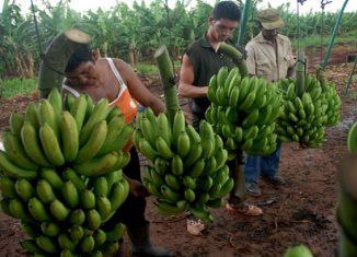 La cita, que tiene como sede el Centro Integral Niceto Pérez , incluye recorridos por fincas y cooperativas de Artemisa, Mayabeque y La Habana, que permitirán apreciar los avances en agroecología, agricultura sostenible y cooperativismo.